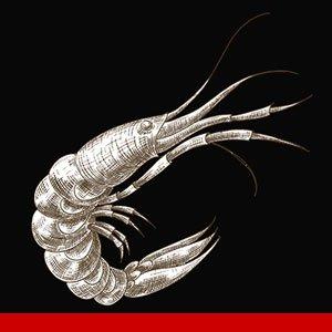 fish-seafood-jessie-read-recipes